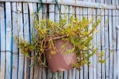Green tree in ceramic flowerpot hanging on wooden fence royalty free stock images