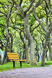 Green tree with chair followed road Royalty Free Stock Images