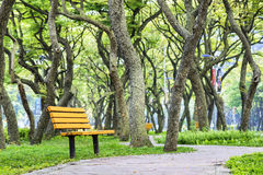 Green tree with chair followed road Royalty Free Stock Image