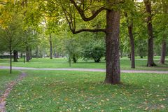 Green tree,city park royalty free stock photo