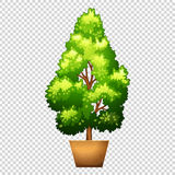 Green tree in clay pot. Illustration Royalty Free Stock Image