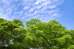 Green Tree with clouds in the sky Royalty Free Stock Photo