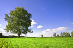Green tree and cloudy sky Royalty Free Stock Image