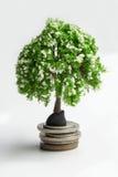 Green tree on coins. Stock Photos