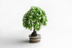 Green tree on coins. Stock Image