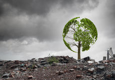 Green tree. Conceptual image of green tree standing on ruins Stock Photos