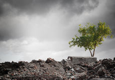 Green tree. Conceptual image of green tree standing on ruins Stock Image