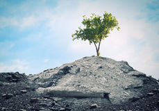 Green tree. Conceptual image of green tree standing on ruins Stock Photo