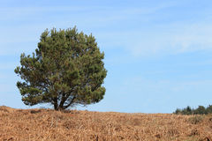 Green tree in countryside Stock Image