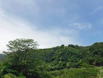 Green Tree Covered Hill on a Partly Cloudy Day Royalty Free Stock Images