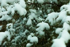 Tree coverd by snow royalty free stock photo