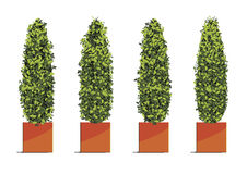 Green tree in cube pots isolated on white background. Vector ill Royalty Free Stock Photography