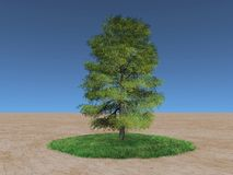 Green tree in the desert. Green tree on a patch of grass in the desert Royalty Free Stock Image