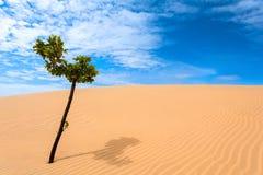 Green tree, desert Stock Photography