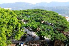 Green tree in dongao island Stock Image