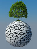 Green tree on a dry cracked planed. And some grass Royalty Free Stock Photo