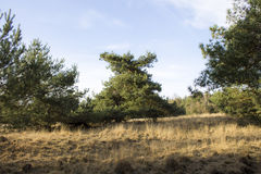 Green tree on dry grass Royalty Free Stock Image