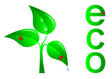Green tree, ecology concept. Vector. Royalty Free Stock Image