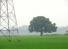Green tree and electric tower in green fields Royalty Free Stock Photo
