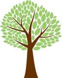 Green Tree. The Family Tree vector illustration Stock Photos