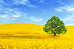 Green tree in the field stock photography