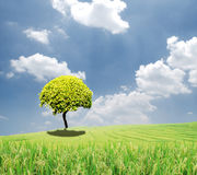 Green tree in a field on blue sky. Tree in a field on blue sky Royalty Free Stock Photography