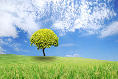 Green tree in a field on blue sky. Green tree in a field with blue sky Royalty Free Stock Image