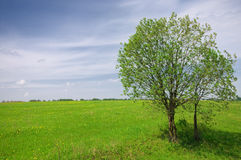 Green tree on the field and cloudy sky Royalty Free Stock Image
