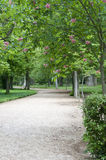 Green tree filled park walkway Stock Images