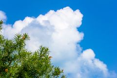 Green tree with flowers, blue sky Royalty Free Stock Image