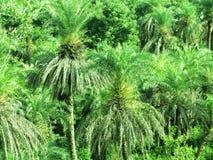 Green tree foliage Royalty Free Stock Photo