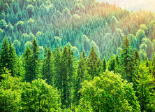 Green tree forest background Stock Photography