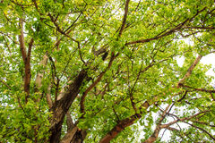Green tree in forest Stock Images
