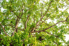 Green tree in forest Royalty Free Stock Images