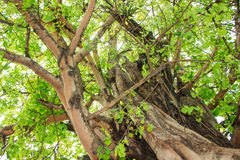 Green tree in forest Royalty Free Stock Photos