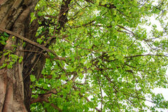 Green tree in forest Stock Photography