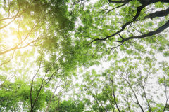 Green tree forest Royalty Free Stock Photos