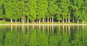 Green Tree Forest Reflection In Water Lake. Green Tree Forest Reflection Abstract In Water Lake stock video