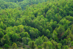 Green tree forest texture Royalty Free Stock Photos