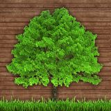 Green tree and fresh grass on a wooden background Stock Photography