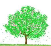 Green tree. Fresh green tree isolated on white stock photos