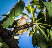 Green Tree Frog. Green frog climb up a tree Stock Images