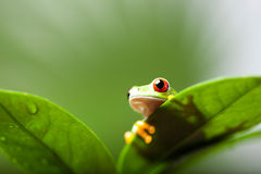 Green tree frog on colorful background Stock Photo