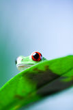 Green tree frog on colorful background Royalty Free Stock Photo