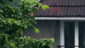 Green tree in front of house in rainy weather, garden nature, autumn nostalgia stock footage