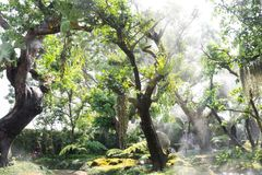 Green tree garden in coffee shop in Chiang Mai Stock Images