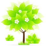 Green tree with grass Stock Photos