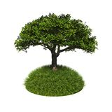 Green tree with grass Royalty Free Stock Image