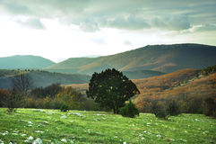 Green tree and grass on top of a mountain in spring. Cloudy sky, yellow trees Stock Images