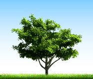 Green tree on grass. Vector Stock Images